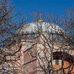 Hagia Sophia Branches, Istanbul 2016