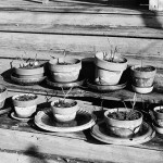 Winter Pots, 1967