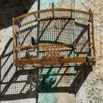 Caged Songbird, Havana 2015
