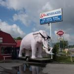 Indiana Pink Elephant, 2013
